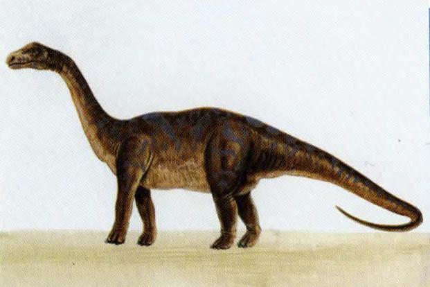 Цетиозавр