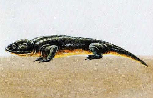 Бранхиозавр