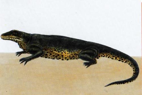 Варанозавр