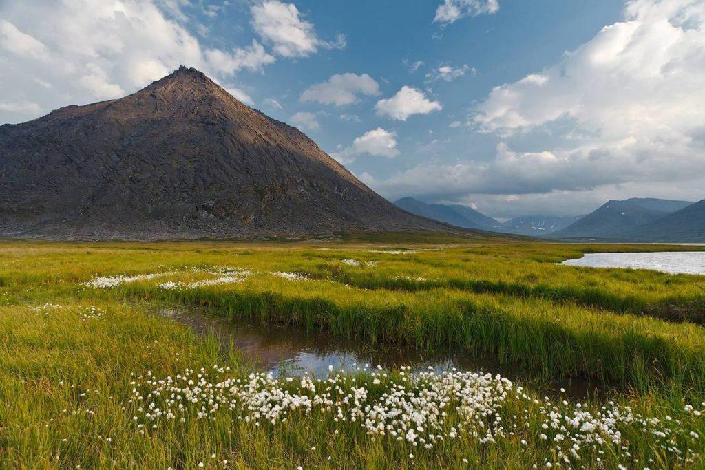 Растительность и животный мир полярного Урала