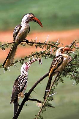 Египет. Наблюдение за птицами