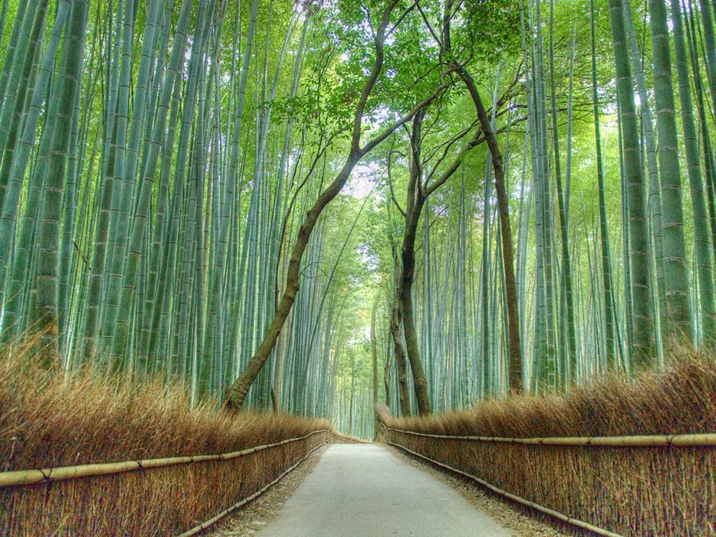 Арашияма: Киото, Япония