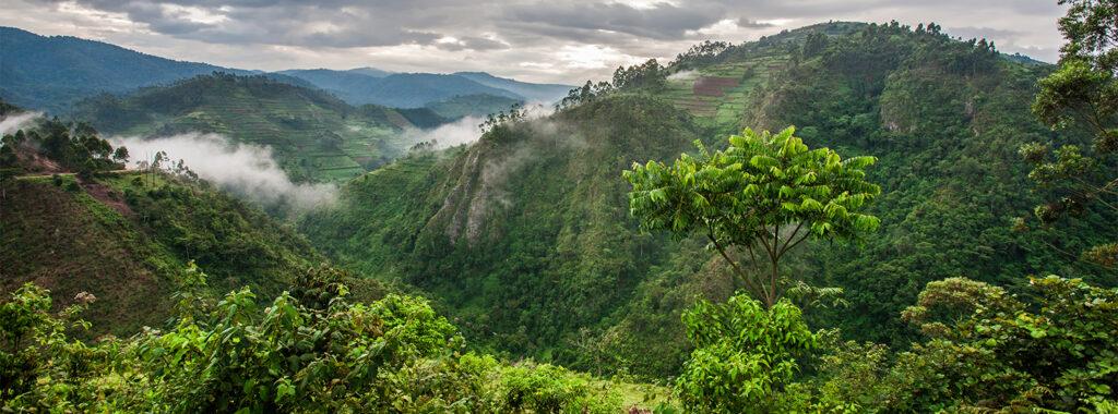 Отдых в Уганде